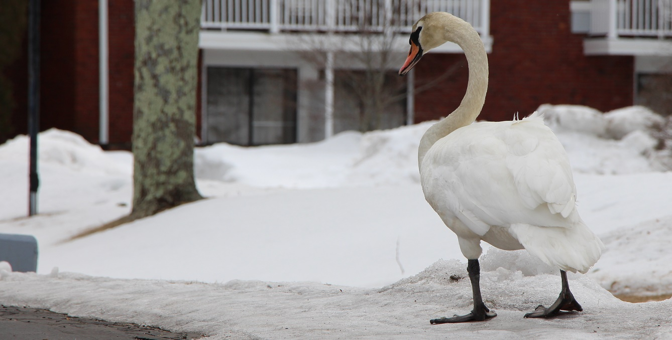 HyTown swan just passing through the hood… [Stills/Video]