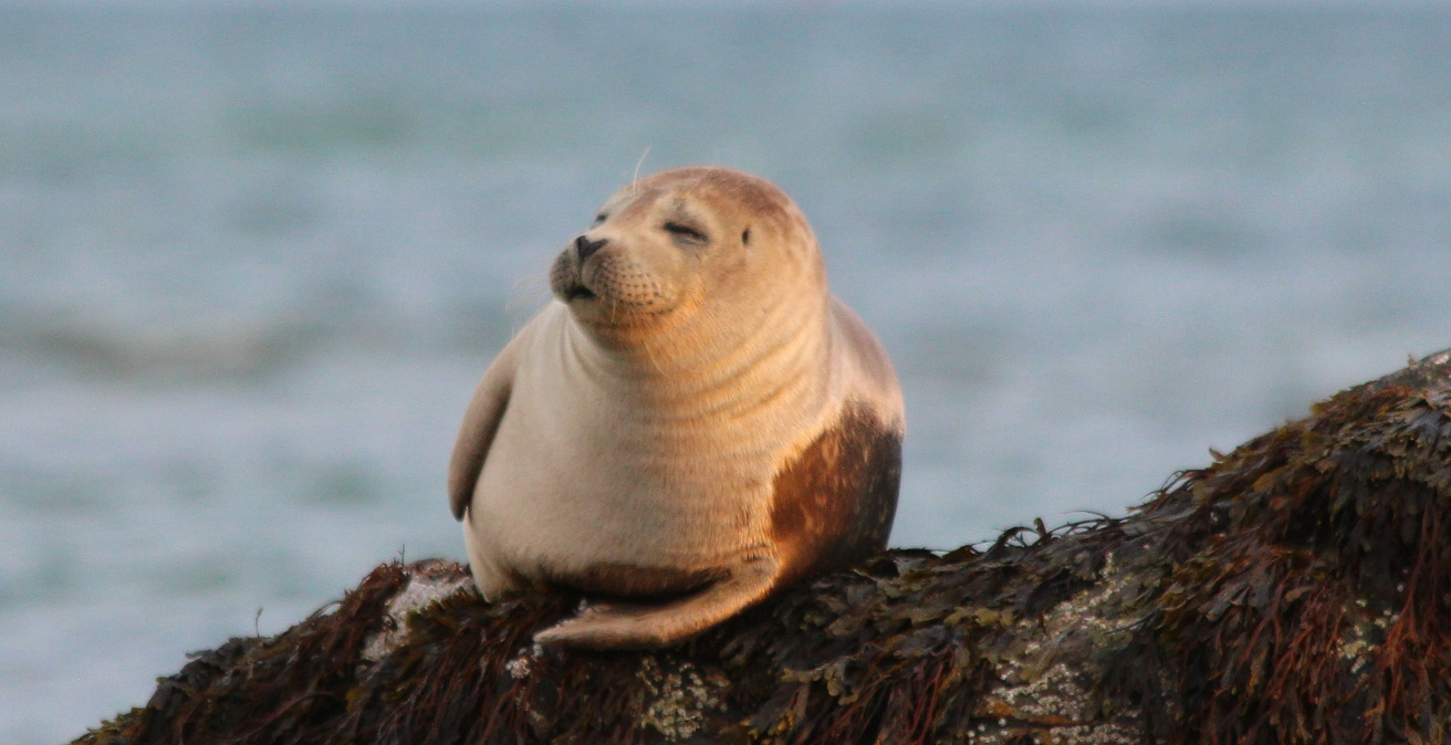 HALF-BAKED PHOTOS:  More and more seals observed on weed lately…   [VIDEO]