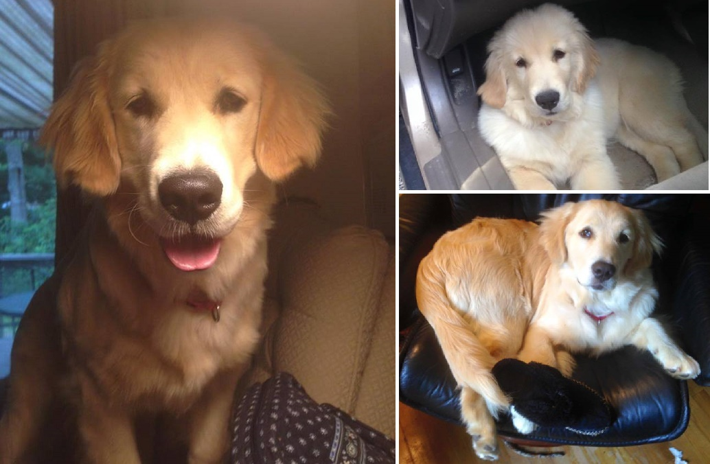 MISSING DOG: Please help Hannah find her way home…
