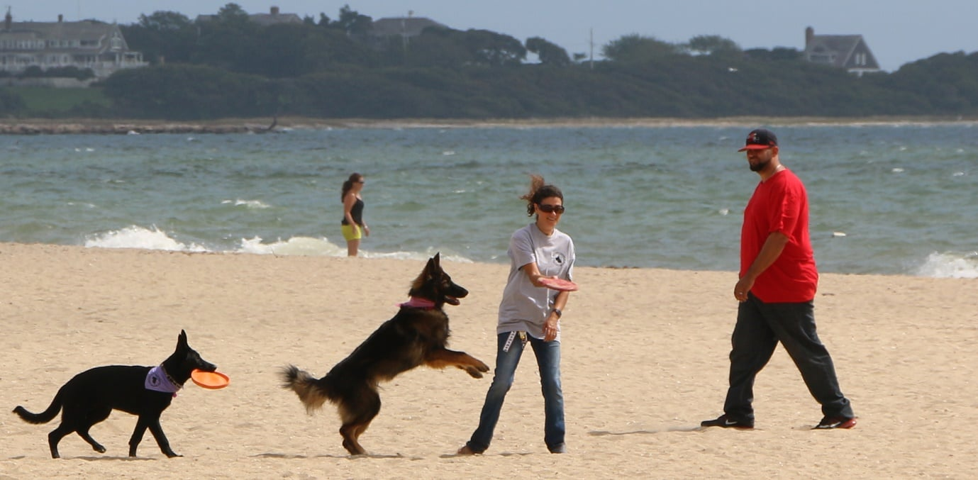 DOGS ALLOWED: Back on Barnstable Beaches… where they belong… [HN PHOTOS!]