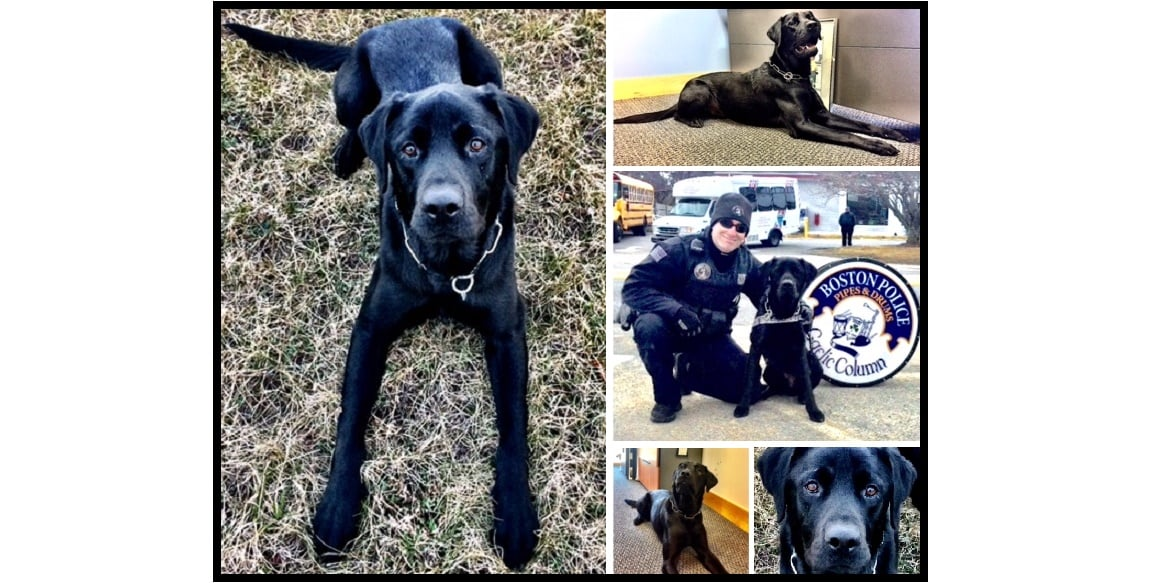 Meet YPD's new PAC pup…