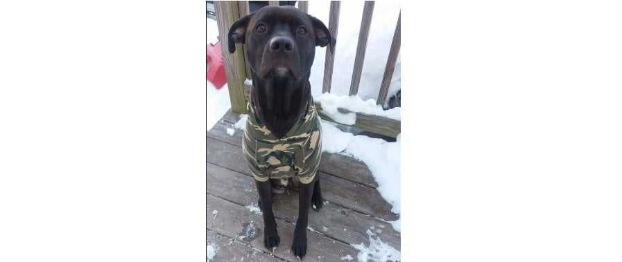 BANGOR DAILY NEWS: Hero dog dies rescuing family in house fire…