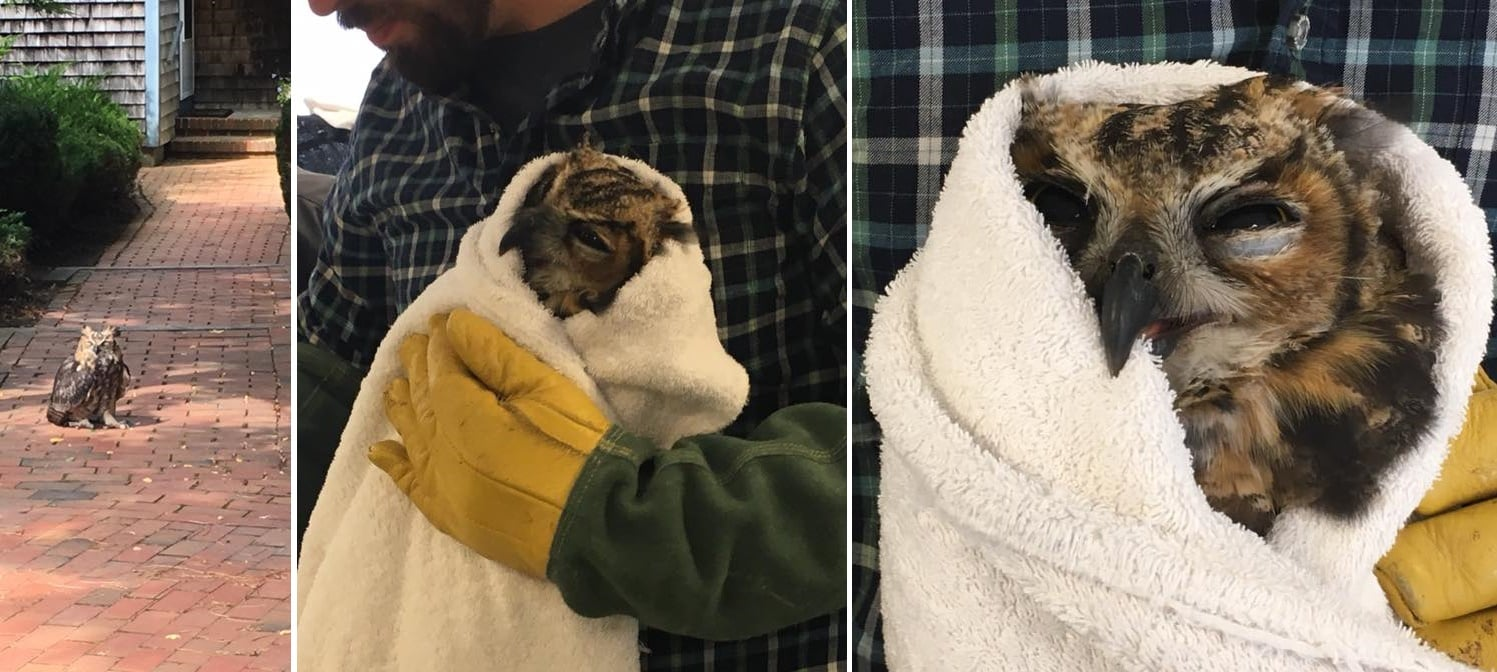 Injured owl now has fighting chance at rehab… thanks to Natural Resource Officer…